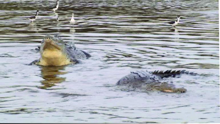 Resultado de imagen para caimanes michoacan lazaro cardenas